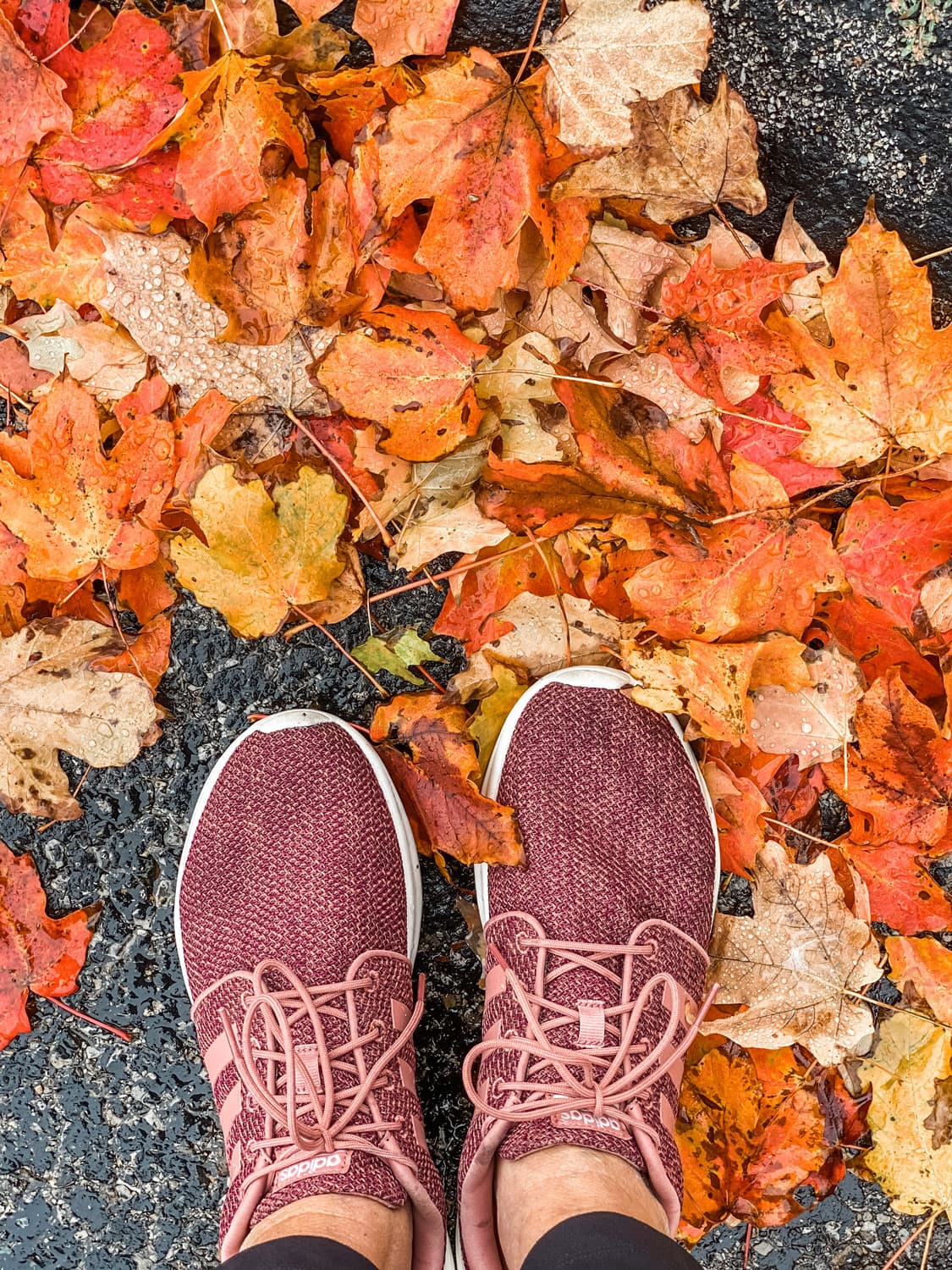 fall leaves and Adidas