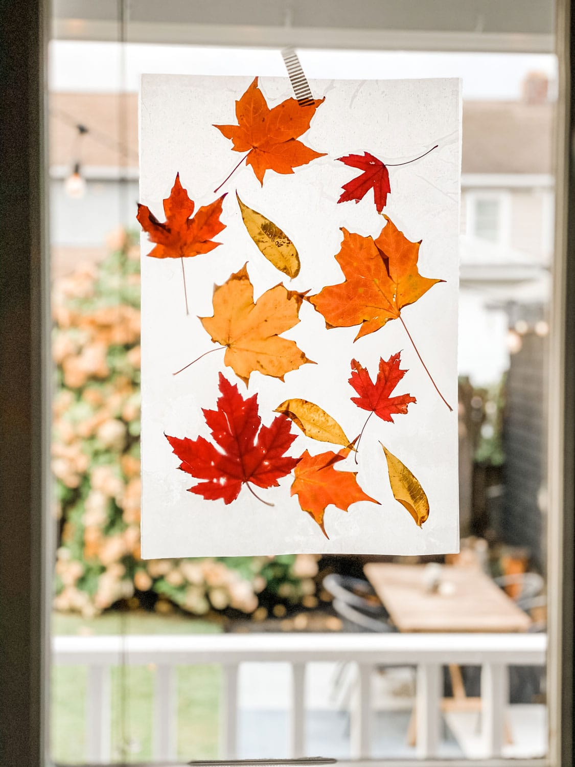 wax paper leaves on glass door