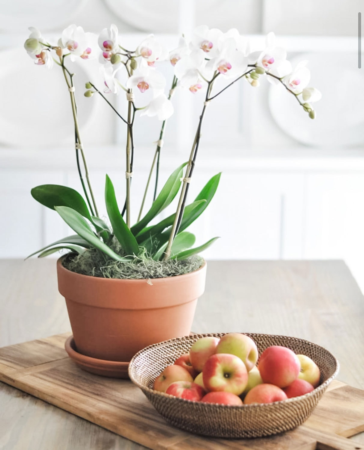 orchids in pot and basket of apples