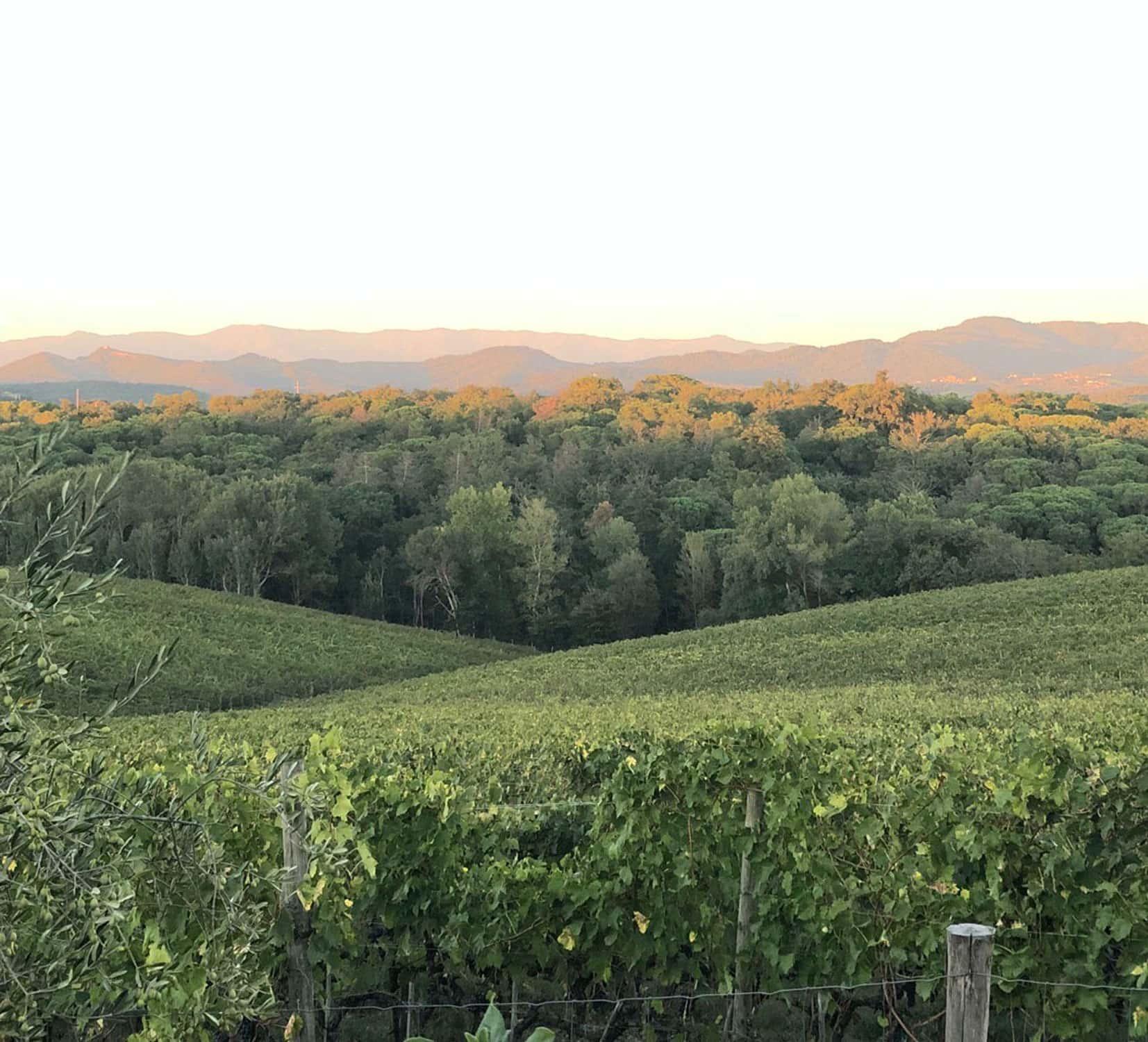 Hills, Tuscany, vineyards