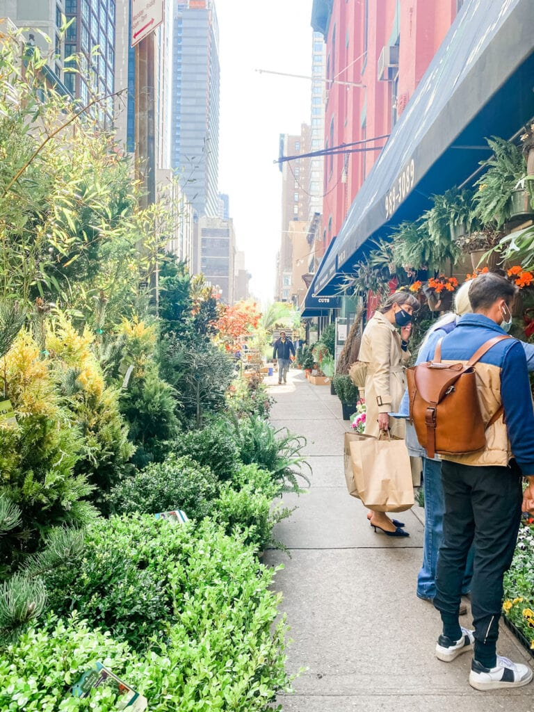 shrubs, trees, plants on street with people looking at plants