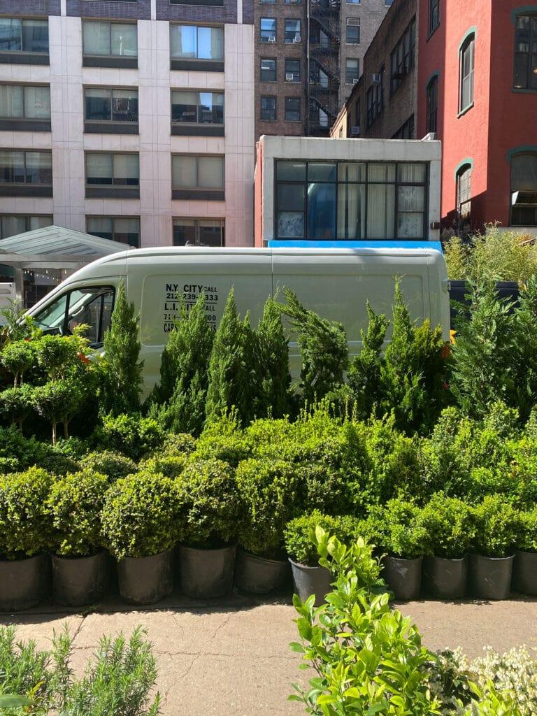 shrubs, small evergreens, van on street in NYC