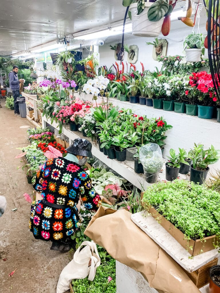 woman wearing a granny square sweater in bright colors selecting plants