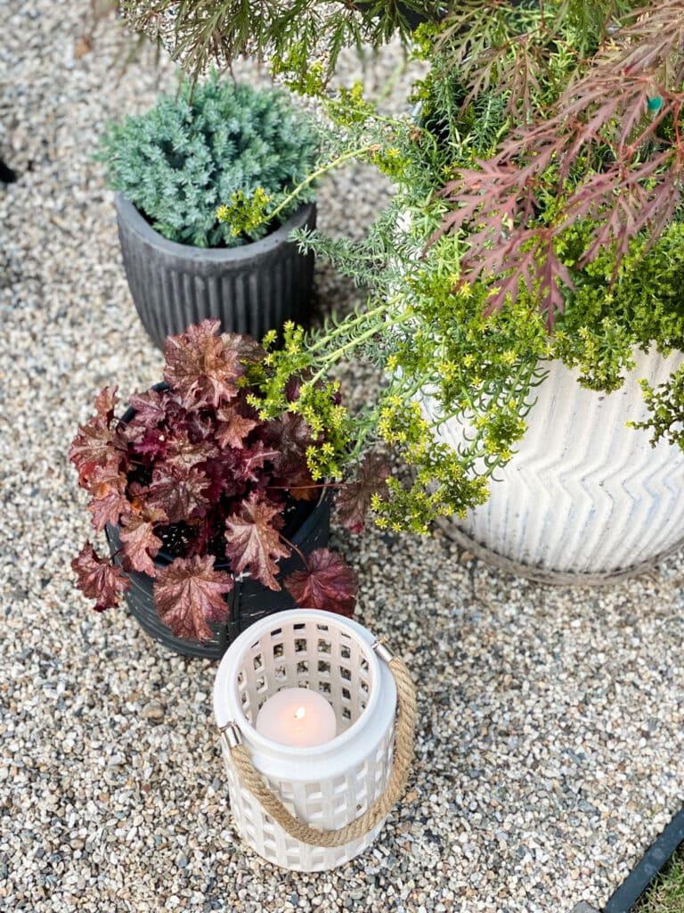 Organic planters and a hurricane