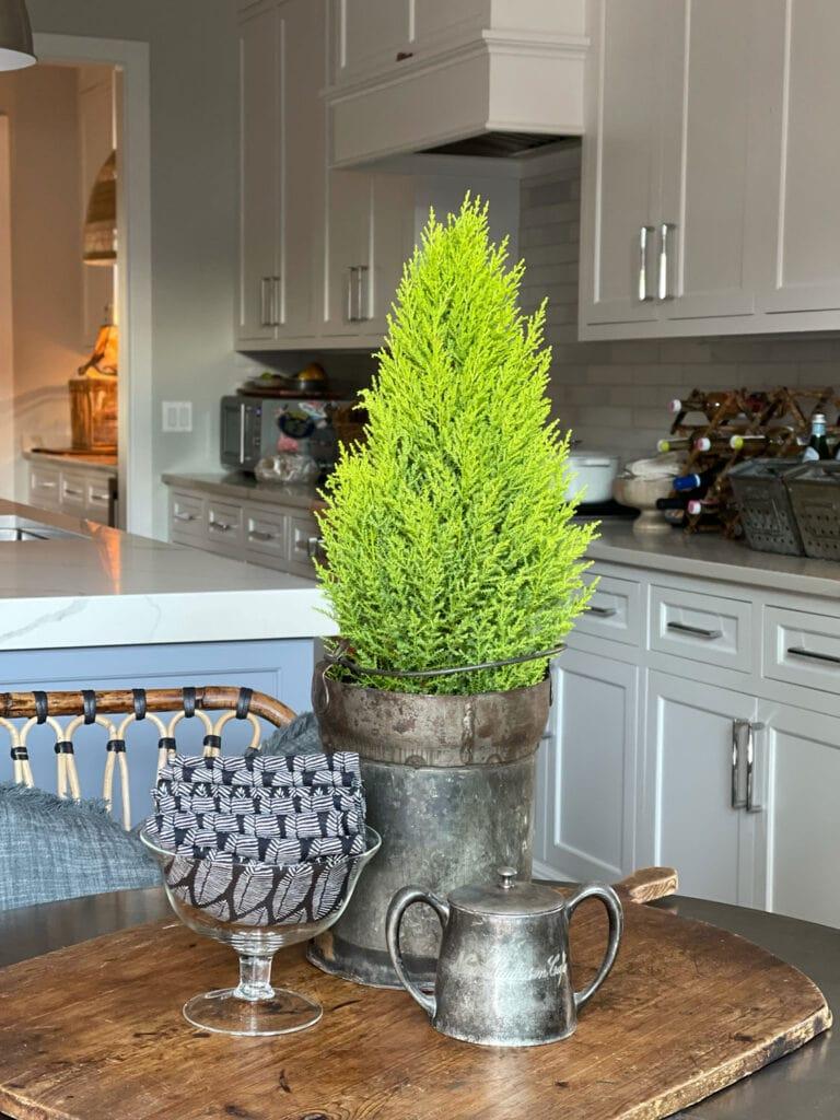 A Lemon Cypress on the Table