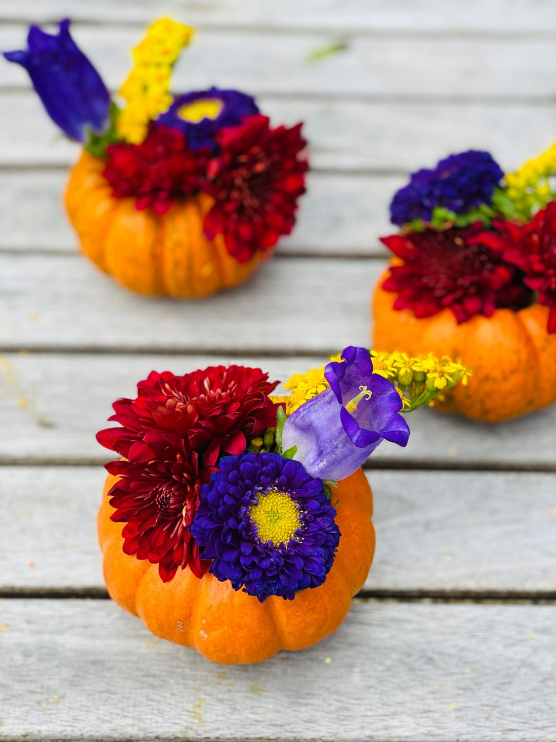 How to Make Mini Pumpkin Planters with real pumpkins and a few fall flowers